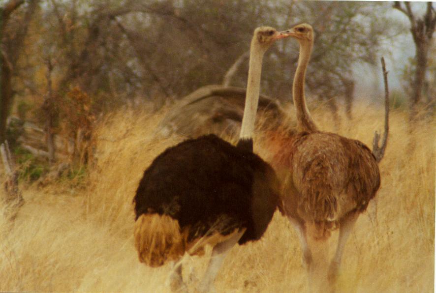 NamibiaBotswanaZimbabwe2000